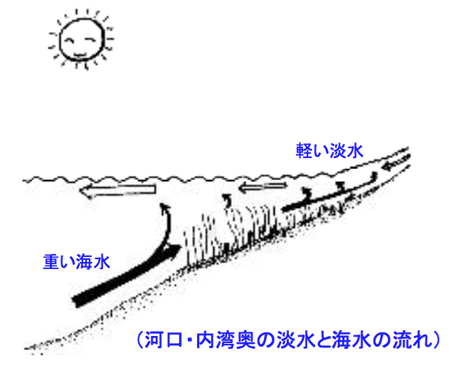 エスチャリー循環 河口から海に